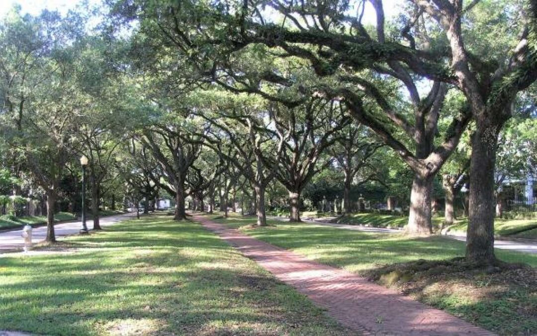 Canopy Comments – Austin Treebune
